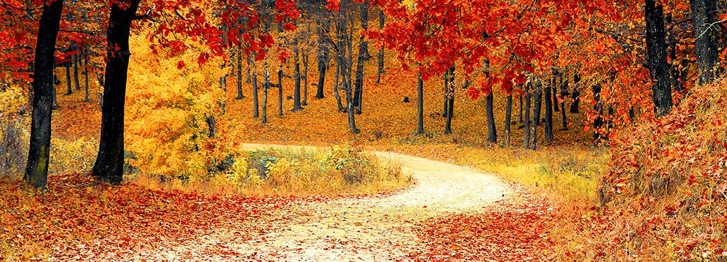 A country road in forest with fall foliage