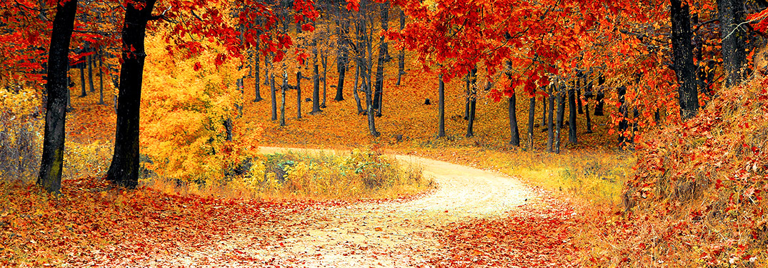 Tips for Driving Safely in Autumn