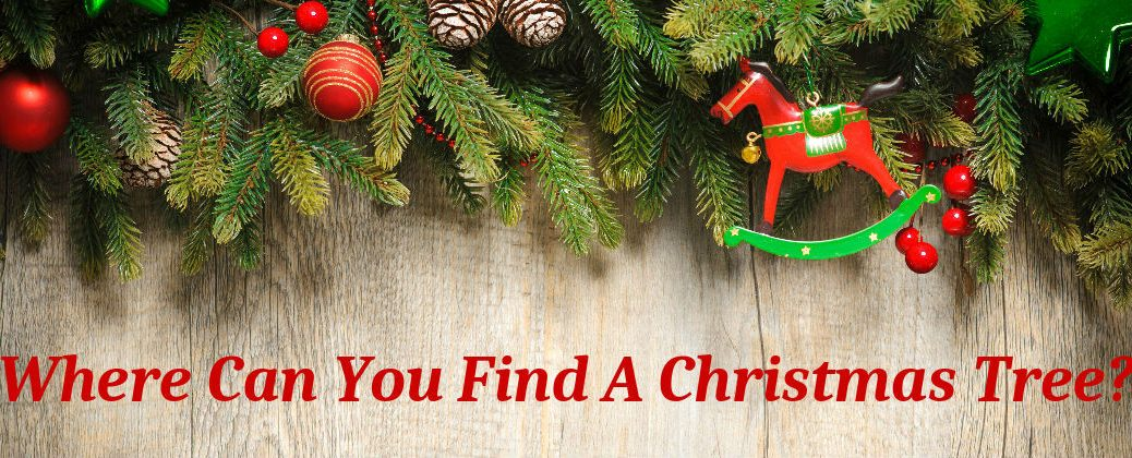 Where Can You Find A Christmas Tree Enfield CT at Gale Toyota-Local Christmas Tree Farms