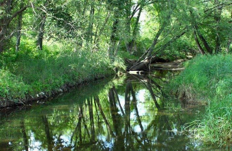 A waterbody in the middle of a forest