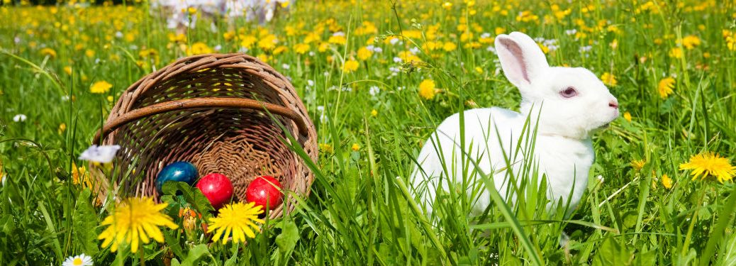 Easter Bunny in grass next to Easter eggs in woven basket