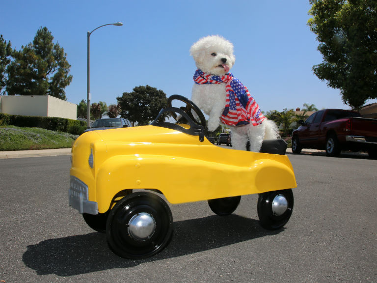 dog in a yellow toy car