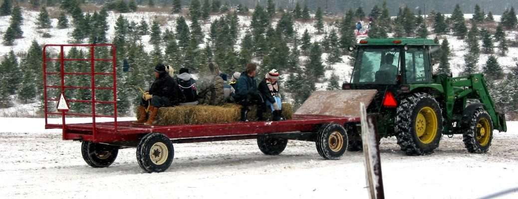 People riding in trailer with Christmas tree