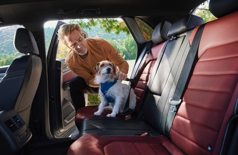 Image of a man buckling his dog in the rear seating area of the 2020 Volkswagen Atlas Cross Sport