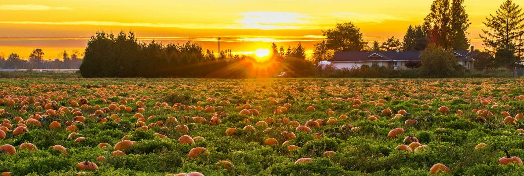 Sunset on Pumpkin Patch