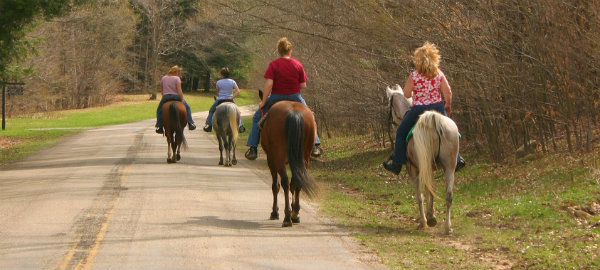Equestrians riding on a paved road