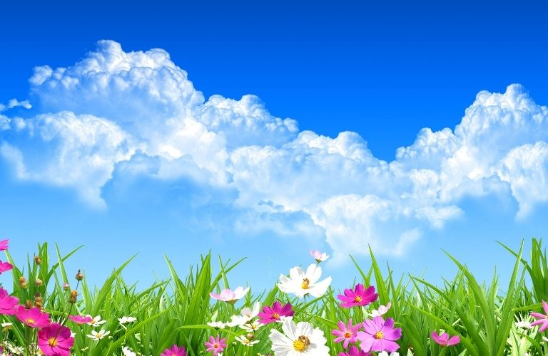 Flowers and grass with a backdrop of blue sky