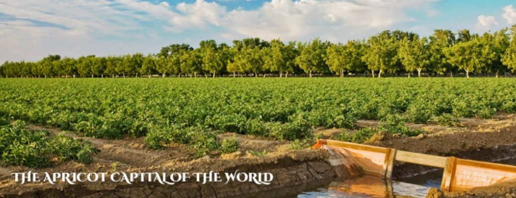 "Image of an apricot farm with ""The Apricot Capital of the World"" in white text"