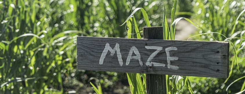 """Image of a wood sign that reads, """"MAZE"""" in front of a corn field"""