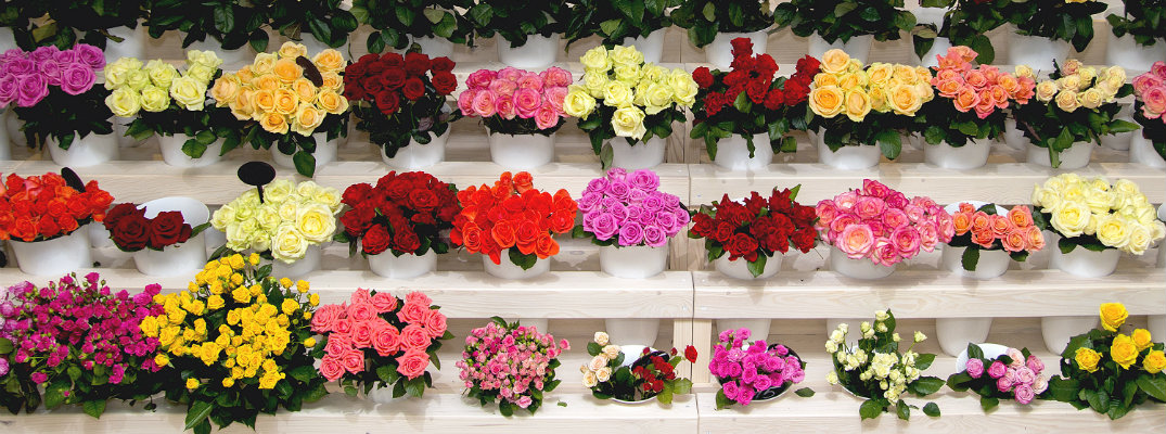 Florists and Flower Shops in Columbus, OH