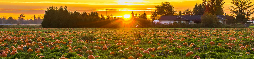 the sun rising over a pumpkin patch and distant farm