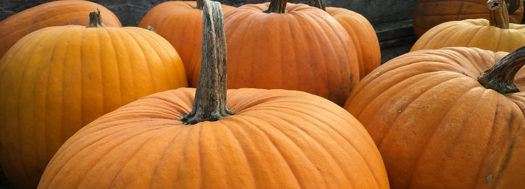 group of pumpkins piled together