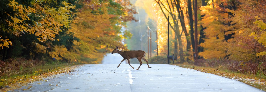 Tips for Safely Driving During Deer Season