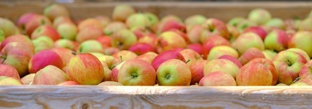 Where Can I Buy Fresh Apples in Green Bay, WI?