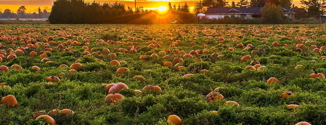Where to find pumpkins in the Green Bay area
