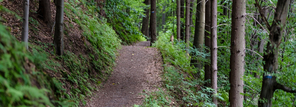 A hilly, dirt trail in the woods