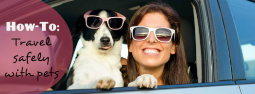 Safely-Travel-with-Pets read more