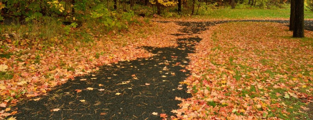 A stock photo of leaves coving a road.