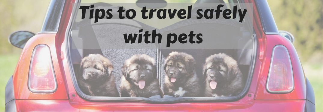Road trip safely with your pet!