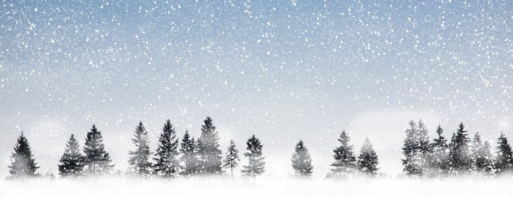 Stylized image of Christmas trees on snowy backdrop