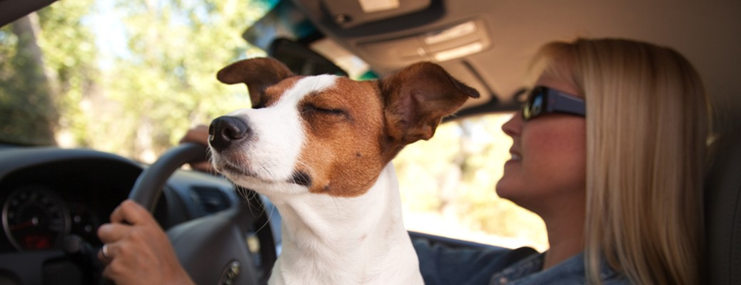 How to pet-proof your vehicle for your next road trip