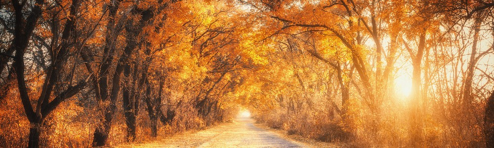 country road in the forest during autumn