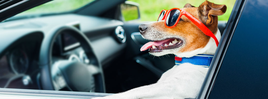 Certified Pre Owned Mercedes >> Pictures Of Dogs In Mercedes-Benz Cars And SUVs
