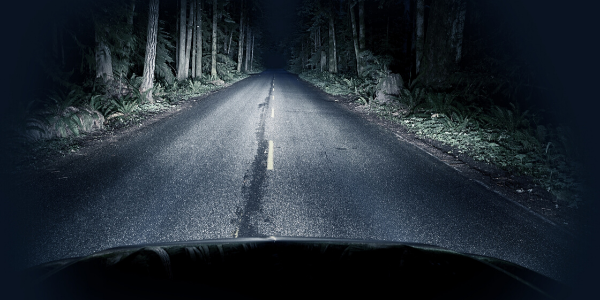 Car headlights illuminating forest road