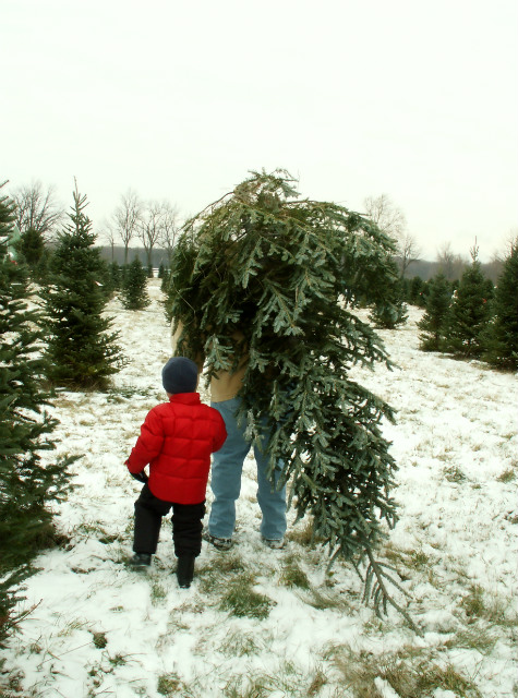 Where to Find Christmas Tree Farms in San Juan Capistrano CA Area