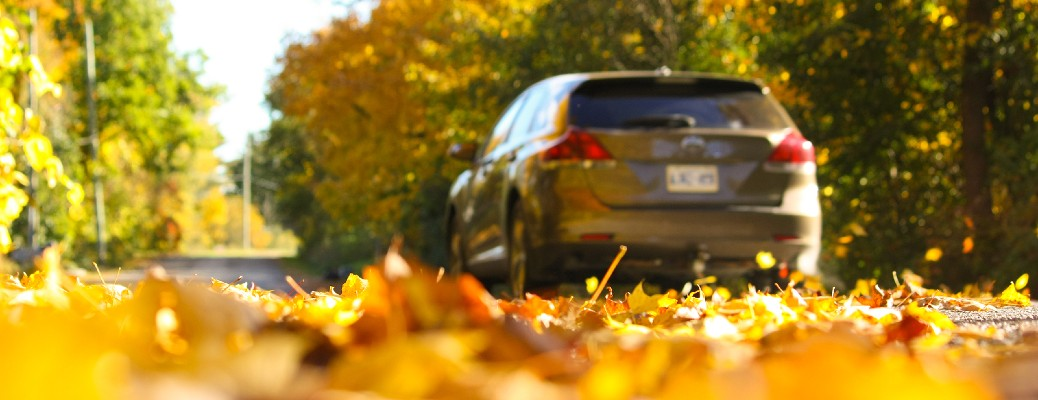 vehicle driving through leaves