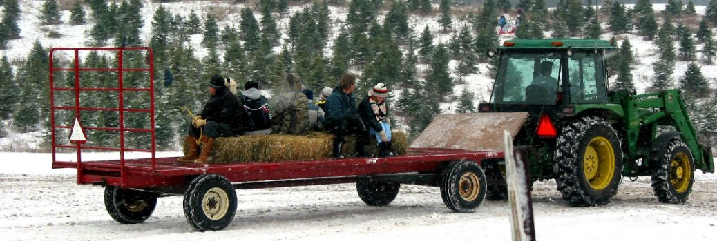 tractor pulling wagon with people and Christmas trees in the snow