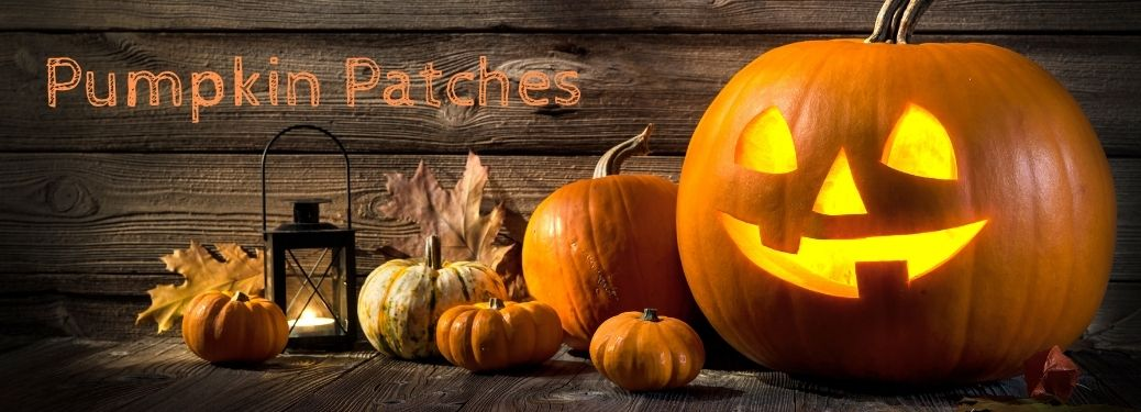 Pumpkin patches text with leaves and pumpkins and a jack-o-lantern in front of wood