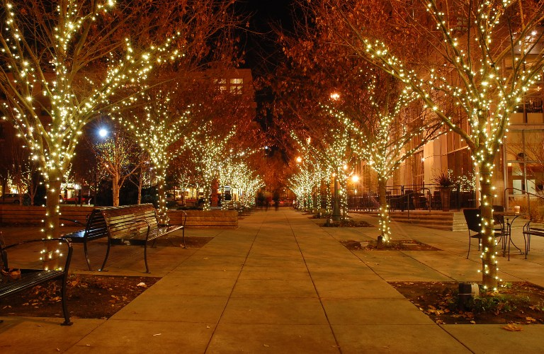 Trees covered in lights