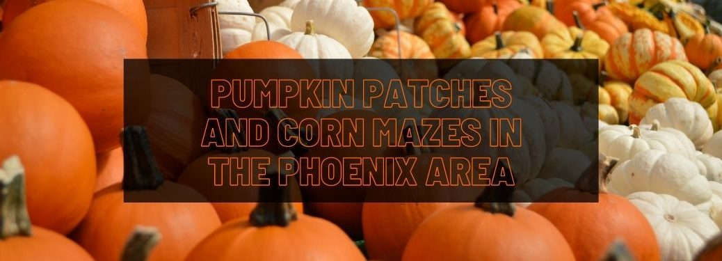 Orange and White Pumpkins with Black Text Box and Orange Pumpkin Patches and Corn Mazes in the Phoenix Area Text
