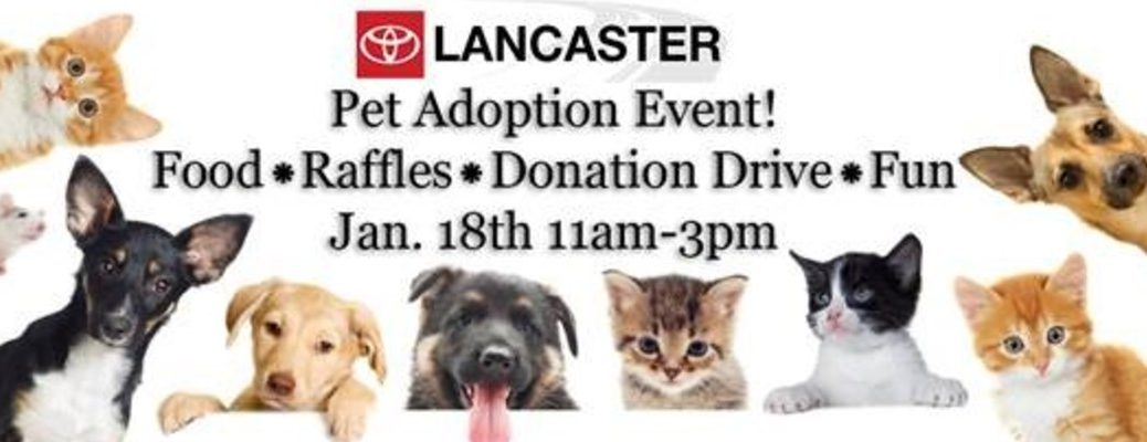 Toyota of Lancaster Pet Adoption Event Banner