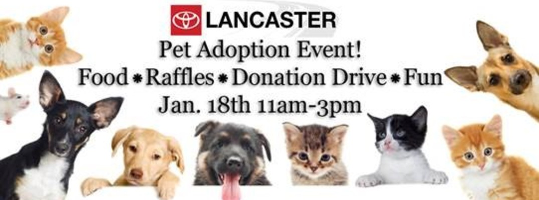Toyota Of Lancaster And Animal Care Center Hold Pet Adoption Event