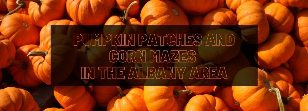Pumpkins with Black Text Box and Orange Pumpkin Patches and Corn Mazes in the Albany Area Text