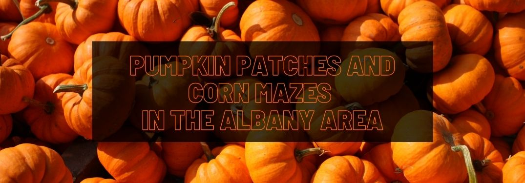 Where To Find the Best Choose-Your-Own Pumpkin Patches in the Albany Area