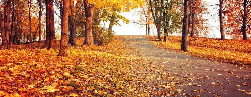 Fall road with leaves falling down