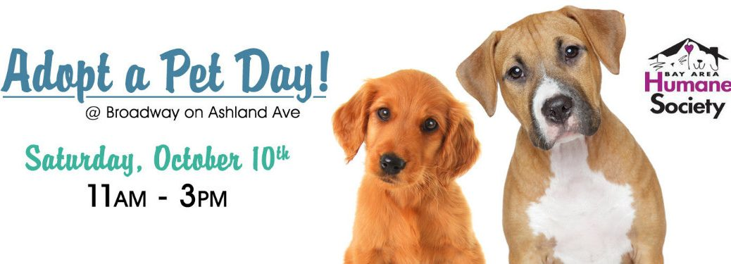 Adopt a Pet Day 2015 at Broadway Automotive