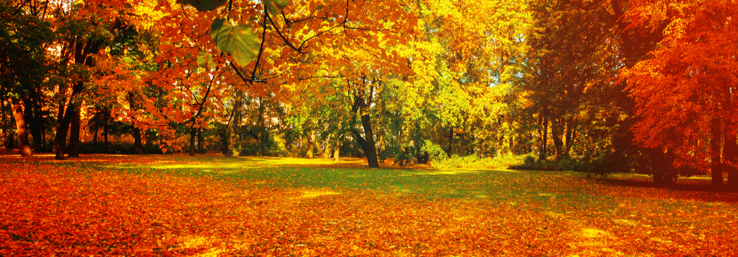 3 Great Tips to Prepare Your Vehicle for Fall and Winter!