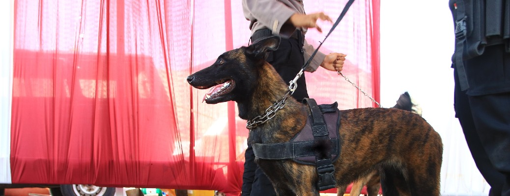 K9 police unit with red curtain
