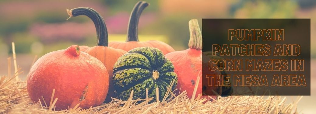 Pumpkins on a Hay Bale with a Black Text Box and Orange Pumpkin Patches and Corn Mazes in the Mesa Area Text