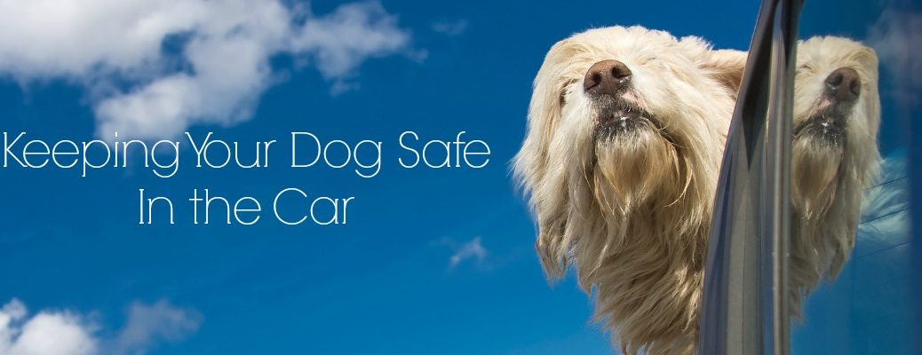Safety Tips for Taking Your Dog in the Car