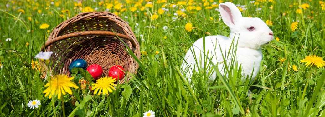 easter egg basket with painted eggs next to white rabbit in grass