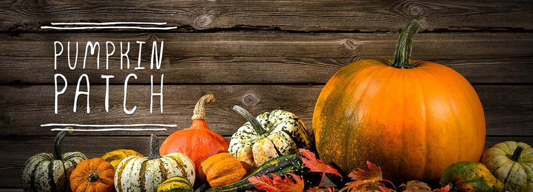 Pumpkins and Gourds with Weathered Wood Background