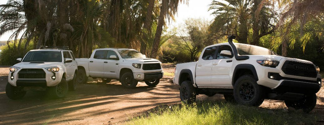Super White 2019 Toyota 4Runner TRD Pro, 2019 Toyota Tundra TRD Pro and 2019 Toyota Tacoma TRD Pro at the Beach with Palm Trees in the Background