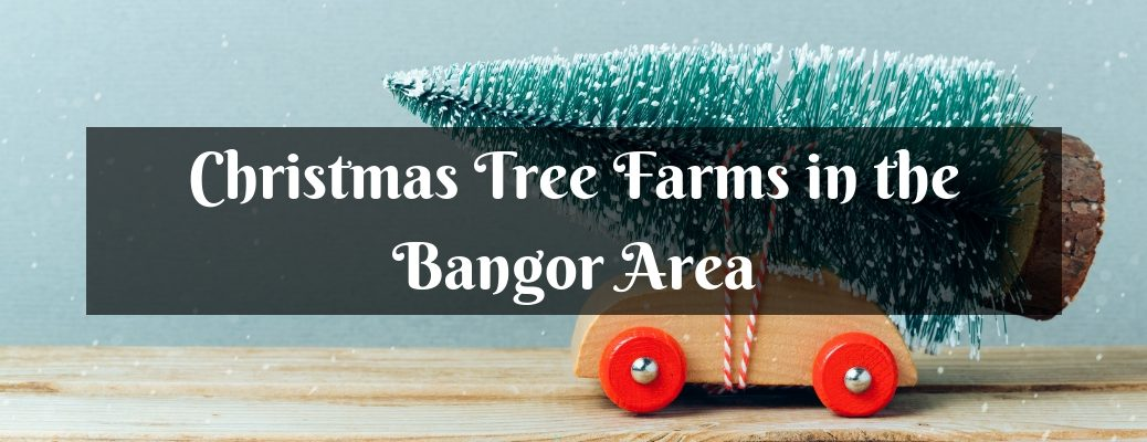 Wooden Car with Toy Christmas Tree Tied to the Roof and White Christmas Tree Farms in the Bangor Area Text