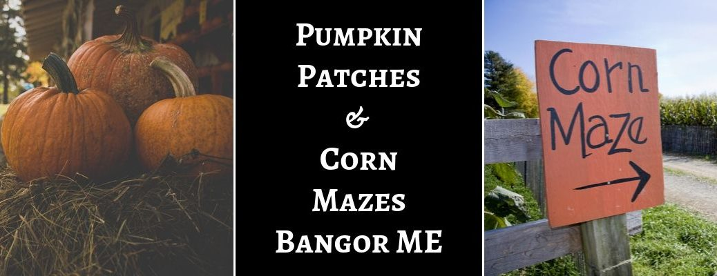 Close Up of Pumpkins on a Hay Bale, Black Background with White Pumpkin Patches & Corn Mazes Bangor ME Text and Orange Corn Maze Sign with Arrow
