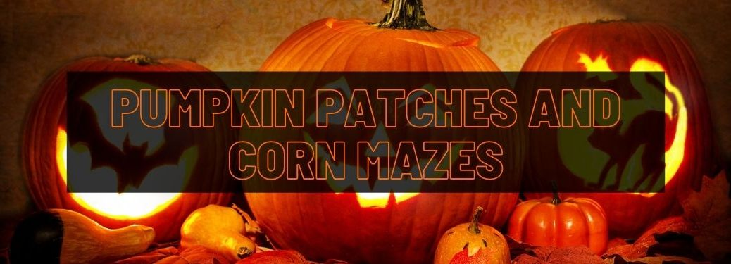 Halloween Jack-o-Lanterns Lit Up and Black Text Box with Orange Pumpkin Patches and Corn Mazes Text